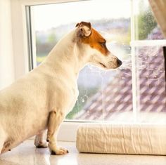 Cuidado com isso gente, eles não ficam bem sozinhos muito tempo! #cachorro #cão #animais #pets