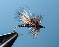 Black Adams Caddis Sizes 20/18/16/14