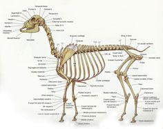 Skeleton.png (1600×1273)