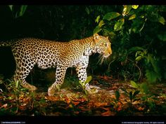 Animals by National Geographic | #Photo #wallpaper #nature @deFharo