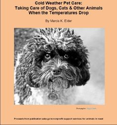 Cold Weather Pet Care: Taking Care of Dogs, Cats « Library User Group