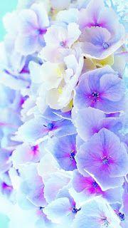 خلفيات ايفون ورد طبيعي Iphone Wallpapers Hd Download In 2020 Flower Wallpaper Beautiful Flowers Wallpapers Beautiful Wallpapers