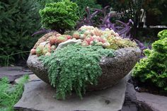 Hypertufa planter with succulents and conifers.