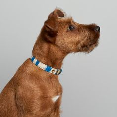 Purchase online cotton and brass dog collar lovingly handmade in Melbourne, Australia by Animals In Charge. Pet Supply Stores, Coast Australia, Japanese Textiles, Large Animals, Greatest Adventure, East Coast, Animal Rescue, Pet Supplies, Your Dog