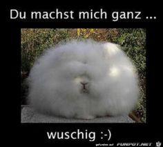 wuschig.png