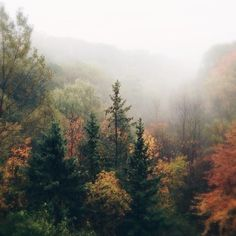 Autumn Aesthetic, Nature Aesthetic, Beautiful World, Beautiful Places, Autumn Photography, Whimsical Photography, Autumn Cozy, The Mountains Are Calling, Pretty Pictures