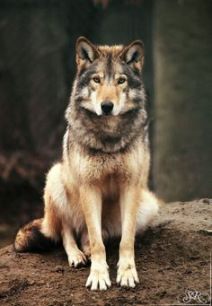 Love will find a way through paths where wolves fear to prey. ~Lord Byron