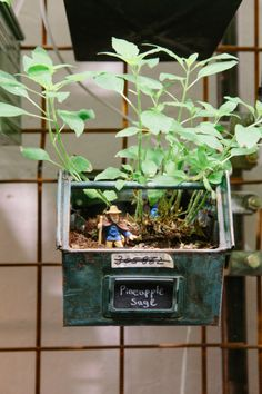 Indoor Farming, Urban Farming, Terrarium, Workplace, Herbs, Restaurant, Guys, Plants, Greenhouses