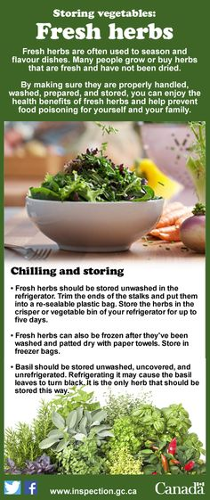 It's important to store herbs properly to prevent the growth of harmful bacteria.