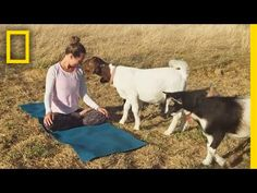 National Geographic: See Why These Cute Little Goats Are the Latest Yoga Craze | Short Film Showcase