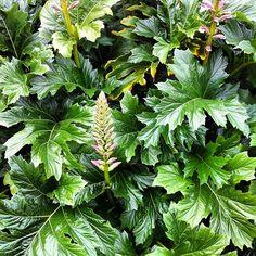 #leaves #plants #flowers #flower #foliage  by #WILLPOWERPHOTO
