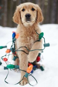 23 Cute Animals Ready for the Holidays
