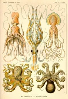 Great print. // BEEBO: Cephalopod Enthusiast