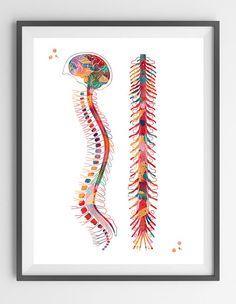 Columna vertebral acuarela anatomía impresión médula espinal