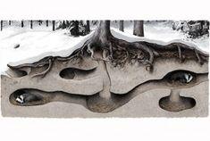 Mäyrän talvipesä voi olla useamman eläimen tunneliverkosto tai yksityisempi kolo vaikka ladon tai siirtolohkareen alla. Kuvitus: Tom Björklund
