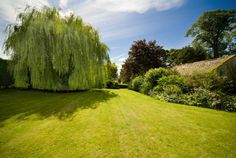 I love this Weeping Willow tree. When I was little my sister and I would swing on willow branches.