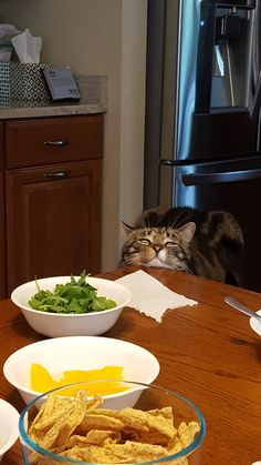 Every night Leonardo DiCatprio comes to the kitchen to join my family for dinner. We pull up his chair and he then proceeds to sit while resting his chin on the edge of the table watching us eat. He's done this for several months now.