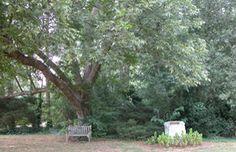 About Hatcher Garden and Woodland Preserve, Spartanburg South Carolina