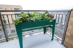 Home & Garden > Planters & Garden Beds > Modular Garden Beds Balcony Planters, Outdoor Planters, Garden Planters, Outdoor Gardens, Trough Planters, Tall Planters, Courtyard Gardens, Balcony Gardening, Modern Planters