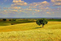 paisagens alentejanas com alentejano deitado á sombra do sobreiro - Pesquisa Google