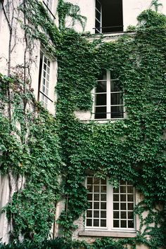 Ivy Wall in Paris   France (by Dearclaudia)