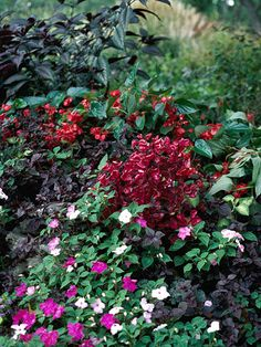 Grow Annuals        Select annuals to create color in shady spots. Annuals are a perfect addition for shade gardens because they bloom all summer long. Top varieties include impatiens, balsam, torenia, browallia, coleus, and iresine.