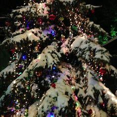 Snow tree -  Schoharie County NY