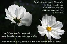 dreamies.de (iezabla9fab.jpg)