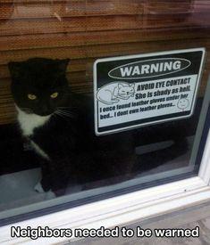 Shady Cat is shady.