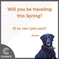 Will you be traveling this Spring?  #pestcontrolservice #pestcontrol #pest #bugs #insects #bedbugs #bedbugdog #dogs #dogslife #dogstagram #dogsofinstagram #dogsrule #follow #instagood #instafollow #awesome #love #happy #smile #fun #cool #northcarolina #northcarolinaliving #carolinas #dogmom #doglover #labrador #labsofinstagram #carolinamom