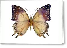 63 Great Nawab Butterfly Greeting Card by Amy Kirkpatrick