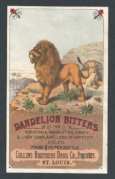 """Classic Collins Drug Dandelion Bitters Trade Card  One of the great trade cards with the lion image, a takeoff of the """"Dandy Lion"""".  Printed by James Hogan Printing, St. Louis  Fine and crisp condition.  Dimensions:   3-5/8 x 6  SOLD $590.00"""