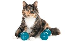 Its estimated that ten to 30 percent of the cats seen by veterinarians are overweight. Theres a good chance their life span will be shortened because they are more prone to arthritis diabetes mellitus and fatty liver syndrome. Pilates, Cat Yawning, Cat Exercise, Pet News, All About Cats, Cat Facts, Pet Health, Weight Loss Plans