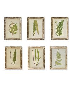Framed Fern Print - Set of Six