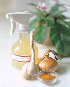cayenne/onion/garlic spray for slugs/aphids etc