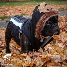 Fallin' for Autumn in my new dog coat. For more of Cooper's adventures, visit: WeeWeeFrenchie.com