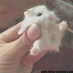 Do you love animals? Well I'll bet you love baby animals even more! Check out these 22 adorable baby animals that will melt your heart! Baby Animals Pictures, Funny Animals, Pet Pictures, Peppa Pig Imagenes, Pet Dogs, Dogs And Puppies, Little Husky, Pet Snake, Cute Hamsters
