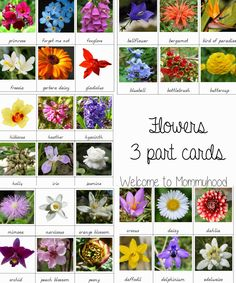 Use these Montessori Flowers 3 Part Cards to create fun spring activities Valentine's Day Activities for Kids: Free Flower themed 3 part cards {Welcome to Mommyhood} Montessori Classroom, Montessori Activities, Preschool Activities, Montessori Homeschool, Senior Activities, Montessori Baby, Preschool Curriculum, Valentines Day Activities, Spring Activities