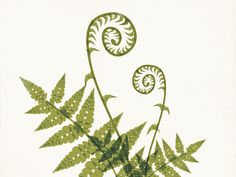 Fiddlehead Fern Illustration by Amy Sullivan - Dribbble