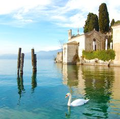 Swan on Punta di San Vigilio – Lago di Garda