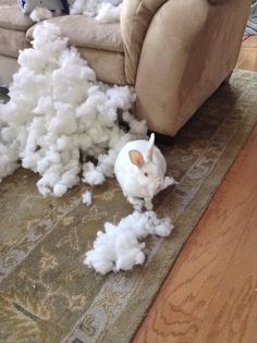 These were so funny!!! 30 pictures of mischievous  bunnies