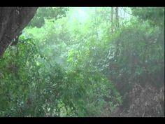 ▶ Heavy Rain & Thunder (For Relaxation) - YouTube