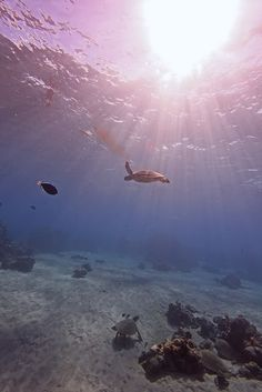 I am a photographer and a scuba diver! I have YET to learn to do under water photography like this :) I want to!