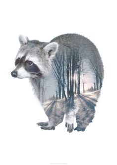 Faunascapes RACCOON Animal Double Exposure Art Print by WhatWeDo available on http://etsy.faunascapes.dk