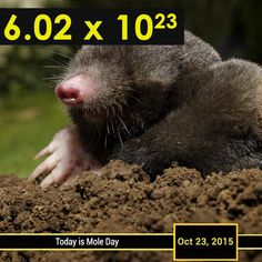 #MoleDay is celebrated among chemists, chemistry students and chemistry enthusiasts on October 23, between 6:02 AM and 6:02 PM. The time and date are derived from Avogadro's number, which is approximately 6.02×1023, defining the number of particles (atoms or molecules) in one mole of substance, one of the seven base SI units.