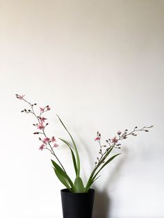 Orchid   iPhone 6