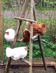 Raising Backyard Chickens, Keeping Chickens, Backyard Farming, Pet Chickens, Plants For Chickens, Diy Chicken Coop Plans, Chicken Coop Designs, Diy Chicken Toys, Cute Chicken Coops