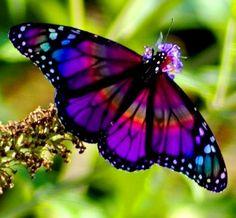 ☜♥☞ butterflies . . . gorgeous colors
