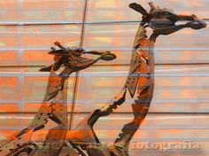 GIRAFFES #13images #artgallery #artsale #artedigital #artonline #buyart #digitalart #artpothography #instaphoto #popart #art #color #colour #arte #design #decoração #decoracao #decor #interiores #galeria #inspire #inspiração #paredegaleria #sobreposicaodefotos #buyart #giraffes #toronto #canada #Edimburgo #escocia