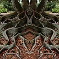Is nature cool, or what? The Moreton Bay Fig tree is more than 160 years old. It is in Santa Barbara, California. Not sure if this is real or photoshopped, but it is amazing!The amazing symmetry of mother nature. ~via Save our green, FB. Art Et Nature, All Nature, Science And Nature, Amazing Nature, Flowers Nature, Weird Trees, Unique Trees, Tree Roots, Tree Art